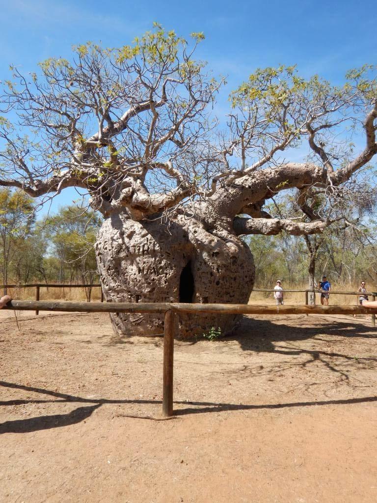 Foto 1 - Boab Prison Tree